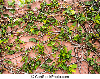 Green leaves on pink cement wall background