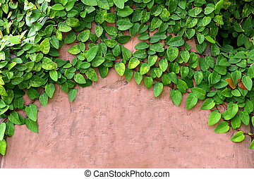 green leaves on plaster wall background
