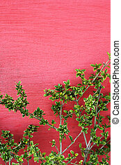 Green leaves on red wall
