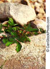 Green leaves on stone background
