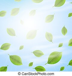 Green leaves on sunny background