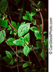 green leaves on the background of nature