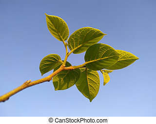 Green leaves on the branch