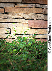 Green leaves on the brick wall