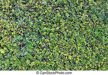 green leaves on the bush texture background