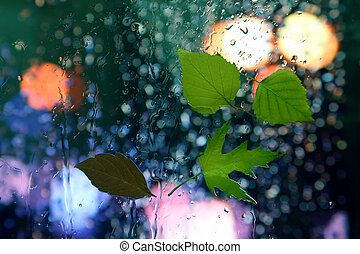 green leaves on the glass in rainy weather