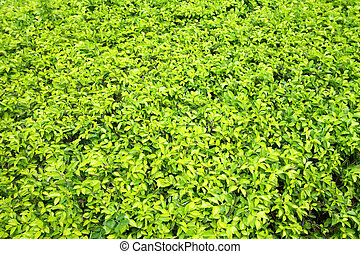 Green leaves on the ground background