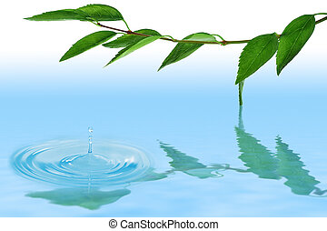 green leaves on the twig - leaves on the twig over water...