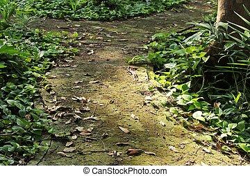 Green leaves on the walkway
