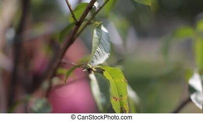 Green leaves on tree HD