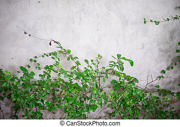Green leaves on wall brick background
