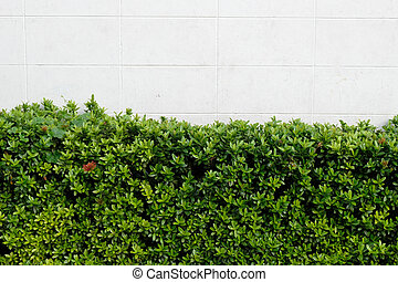 Green Leaves on Wall