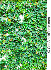 green leaves on wall texture background