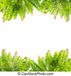 Green leaves on white background.