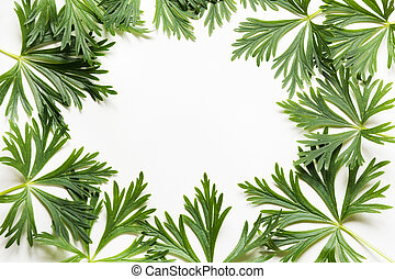 Green leaves on white background. Top view with copy space. Isolated.