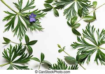 Green leaves on white background. Top view with copy space.
