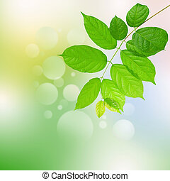 green leaves on white use for multipurpose background