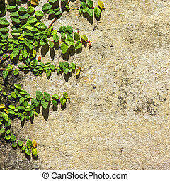 green leaves on yellow wall