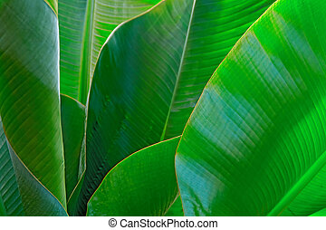 Green leaves palm. Vegetative background with selective focus. For cover, poster, advertising and decoration.