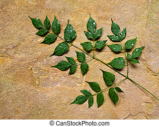Green leaves placed on the stone slab