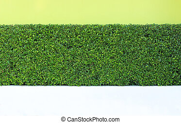 green leaves plant on vertical garden wall