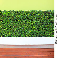 green leaves plant on wall and wood floor