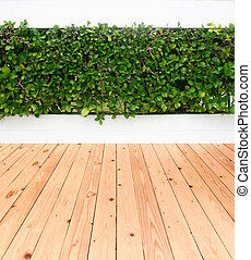green leaves plant on wall with wood floor