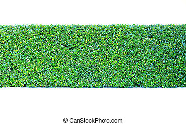 green leaves plant vertical garden wall