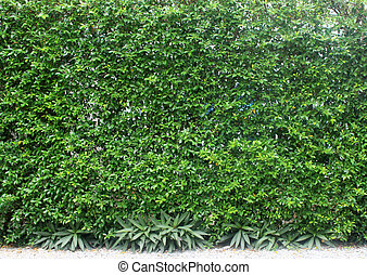 green leaves plant vertical on wall
