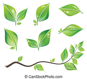 Green leaves set - Set of green fresh leaves and branch with...