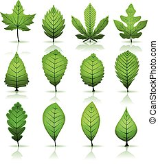 Green Leaves Set