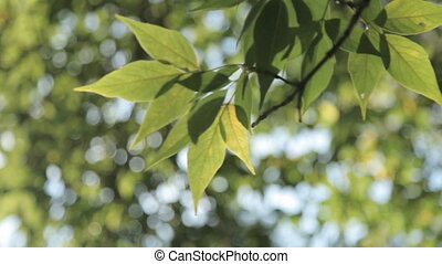 Green leaves swaying in the wind
