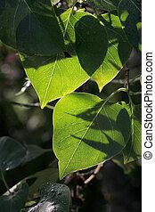 Green leaves three