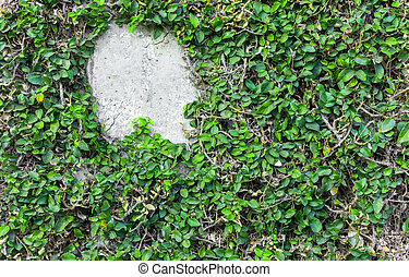 Green leaves wall background texture