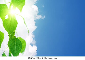 Green leaves, white clouds, blue sky