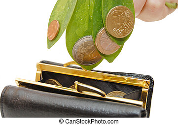 Green leaves with coins and a purse on a white background