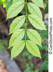 Green leaves with fresh natural