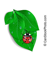 Green leaves with ladybird and water drops