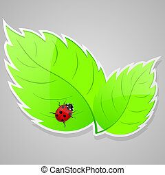 Green leaves with ladybird. Vector illustrarion.