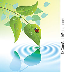 green leaves with ladybug - water ripple and green leaves...