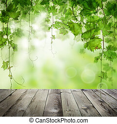Green leaves with morning sunlight background