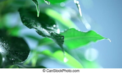 green leaves with rain drops on it