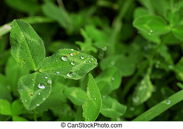 green leaves with raindrops as summer background