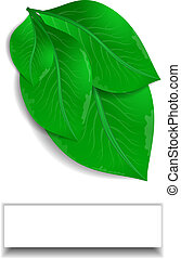 Green leaves with white banner