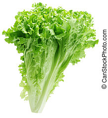 Green lettuce plant isolated on white background
