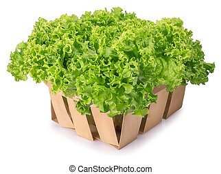 green lettuce in basket isolated on white background