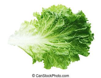 Green Lettuce Leaf