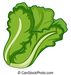 Green lettuce on white background