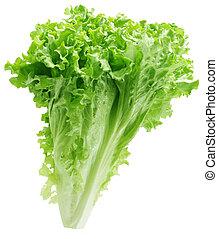 Green Lettuce - Green lettuce plant isolated on white...