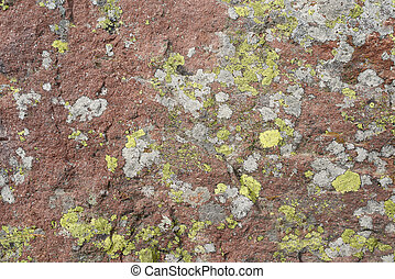 green lichen background in the stone